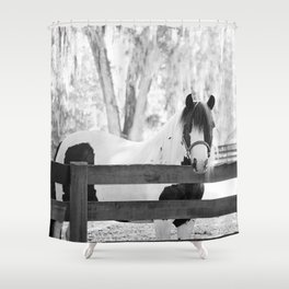 Gypsy Vanner Beauty Shower Curtain
