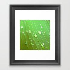 Jungle Drops. Framed Art Print