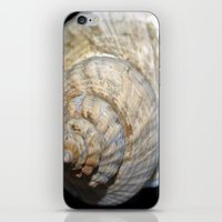 shell iPhone & iPod Skins featuring Shell by Brian Raggatt