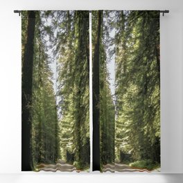 Avenue of the Giants Blackout Curtain