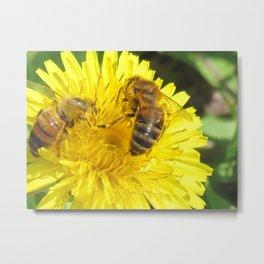 dandelion and honeybees Metal Print