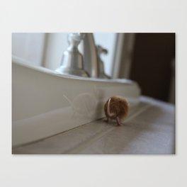 Orange mouse Canvas Print