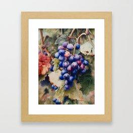 Cabernet grapes Framed Art Print