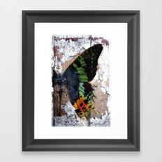 Sunset Moth Wing Abstract Framed Art Print