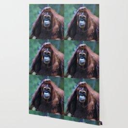 Orangutan Portrait Wallpaper