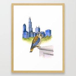 American Kestrel with Chicago skyline Framed Art Print