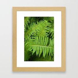 GREEN FERN POETRY Framed Art Print