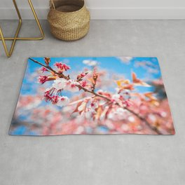 The Bloom | Nature Photography of Pink Japanese Cherry Blossom Flowers Blooming in Spring Rug