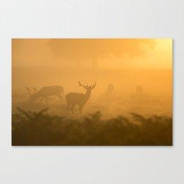 Sunset Deer Canvas Print