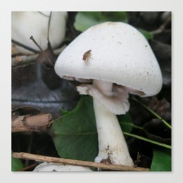 Mushroom and Bug Canvas Print
