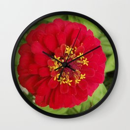 Red, RED Zinnia Wall Clock