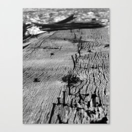 Board, Yet Canvas Print