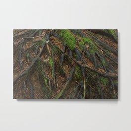 Mosssy Rooots Metal Print