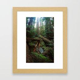 Humboldt Redwoods State Park Framed Art Print