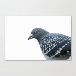 Peace Bird Canvas Print