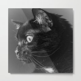 Pensive Kitty Metal Print