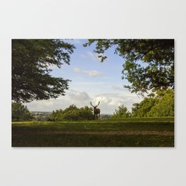 Reed Deer Overlook Canvas Print