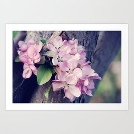 Crabapple Blossoms Art Print