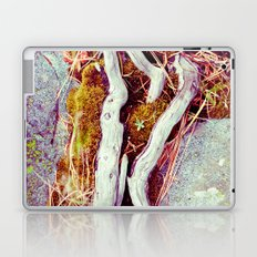 Forest Succulent Laptop & iPad Skin