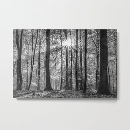 Beech Wood Sunrise Metal Print