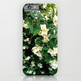 White Jasmin Bush in Bloom iPhone Case