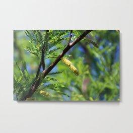 Closeup of Avocado Green Mesquite Tree Catkins Metal Print