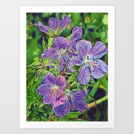 Six Wild Geraniums Art Print