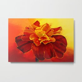 Painting of a Marigold Flower in Red and Orange Metal Print