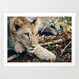 Lion Cub 3 Art Print