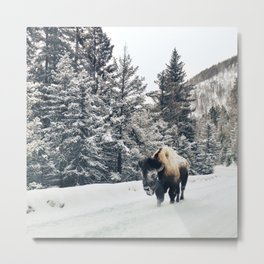 Frosty Bison Metal Print