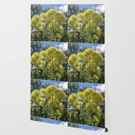 Glowing yellow meadow-rue, Thalictrum flavum Wallpaper