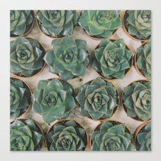 Succulent Collection Canvas Print