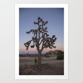 Joshua Tree Sunset Art Print