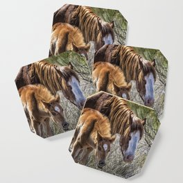 Wild Foal with Dad Coaster