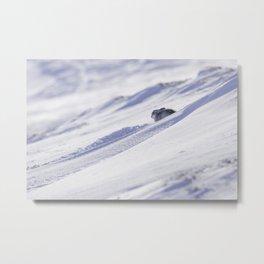 Mountain hare on snow slope Metal Print