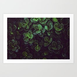 NATURE - LEAVES - FRESH - PHOTOGRAPHY Art Print