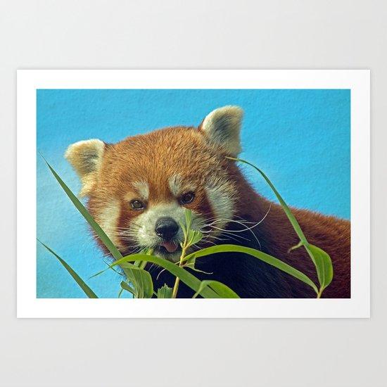 RED PANDA LOVE Art Print