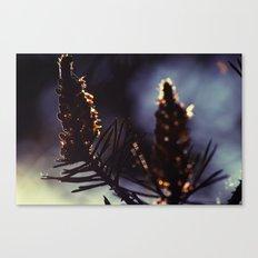Fallin In Pollen Canvas Print