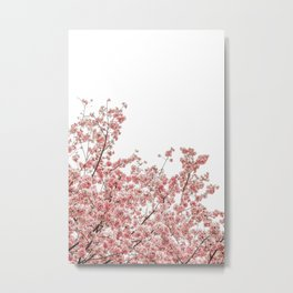 Cherry Blossoms (Color) Metal Print