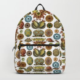 Ernst Haeckel Ascidiae Sea Squirts White Background Backpack