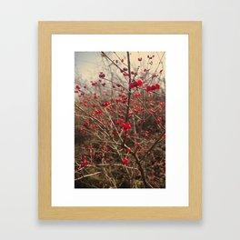Red Winter Berries Framed Art Print
