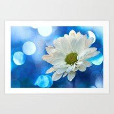 White Daisy on Blue Art Print