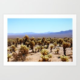 Spring Time in Joshua Tree Art Print
