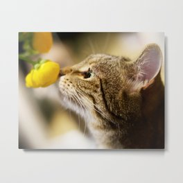 Tabby and the Flower Metal Print