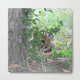 cautious view,baby cheetah Metal Print