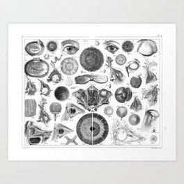 1857 Diagram Anatomy including the Eye Art Print