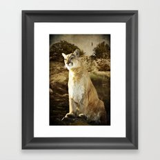 Cougar Framed Art Print