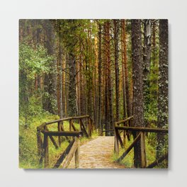 across the forest Metal Print