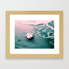 Shell on the beach 02 Framed Art Print
