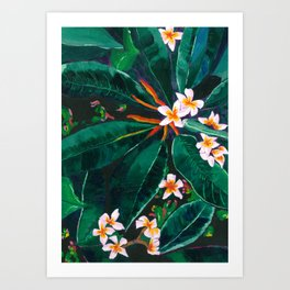 Frangipanis Art Print